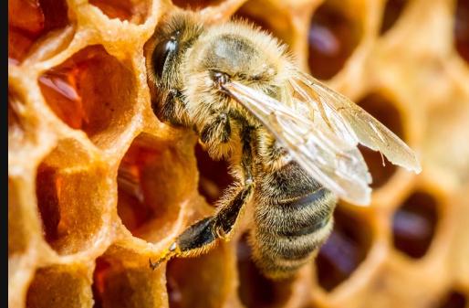 怎么样捕捉树洞里的野生蜜蜂