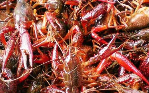 淡水龙虾养殖成本大概要多少?