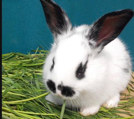 2019年养兔子养殖还赚钱吗?