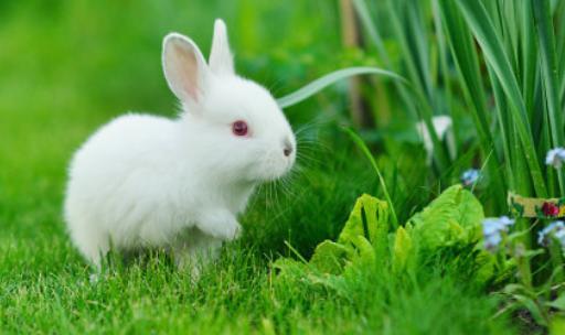杂交野兔养殖技术有哪些
