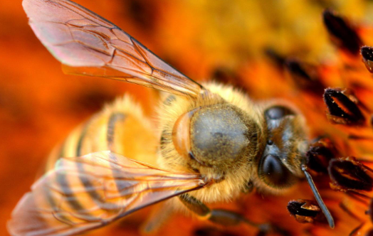 蜜蜂养殖的基本技术要求