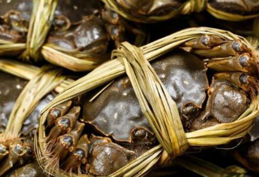 养螃蟹一亩能要多少本钱?
