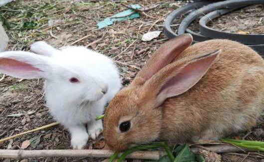 养兔子为什么不吉利有什么说法?