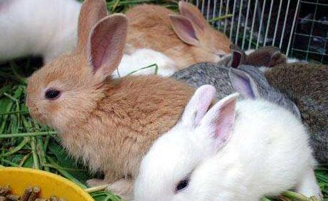兔子十不喂主要有哪些?