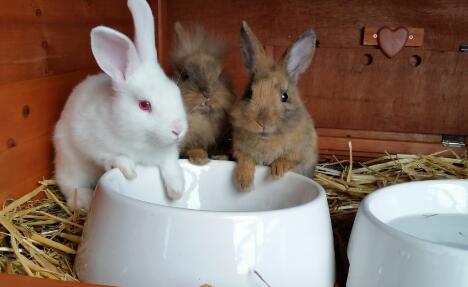 50只母兔一年的利润有多少?