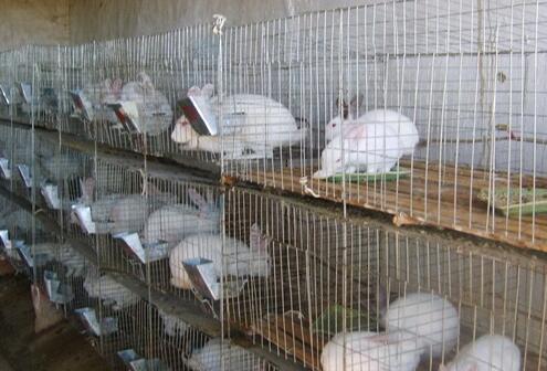 兔子养殖是骗局吗?
