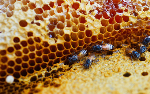 老蜂巢和新蜂巢哪个好