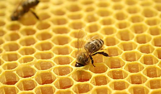 养蜜蜂赚钱吗?