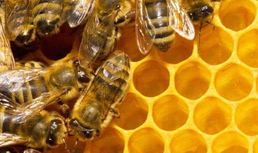野生蜂巢的功效及食用方法有哪些