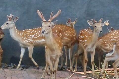 广春鹿业和九鹿鹿业哪家好?