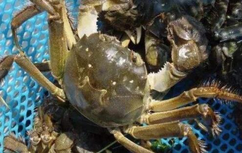 大闸蟹怎么挑选蟹黄多的?