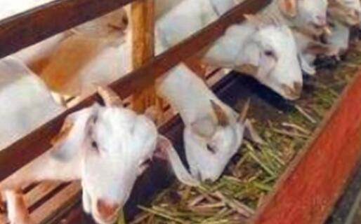 羊价下跌2020年是真的吗?