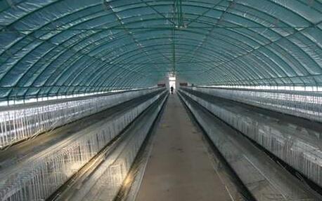 现代蛋鸡养殖大棚要怎么建?