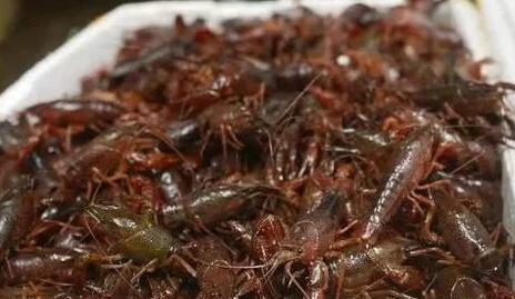 小龙虾养殖温度多少好?