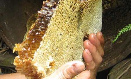 土蜂蜜产地主要是哪些地方?