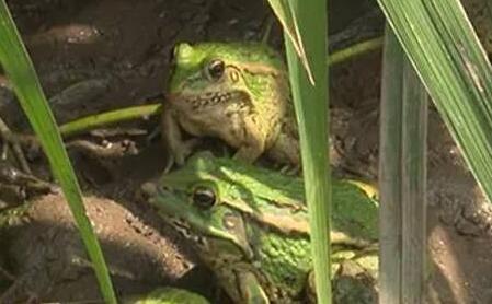 青蛙市场价格是多少钱一斤?