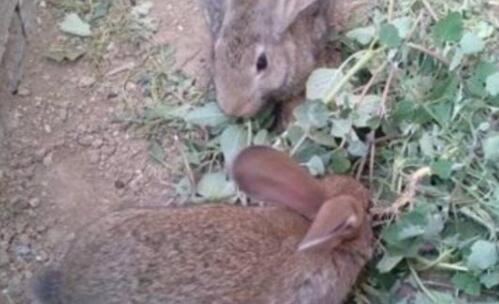 现在养殖500只兔子要投资多少钱?