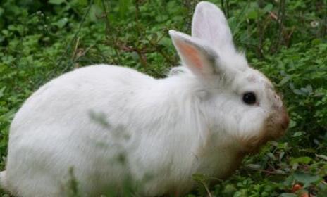 养兔子销路难吗?