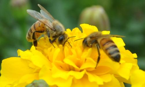 蜜蜂四季养殖技术