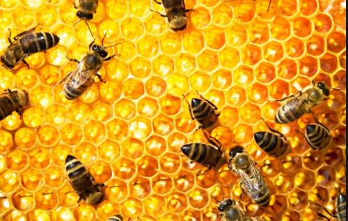 野蜂巢大概多少钱一斤