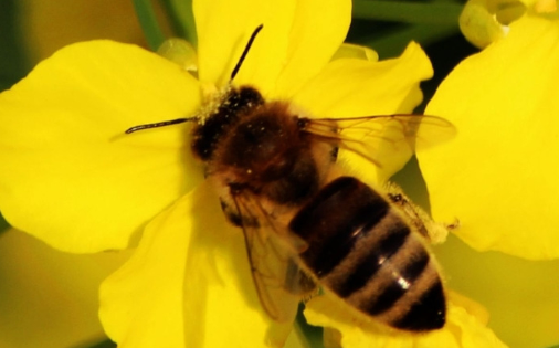 蜜蜂养殖技术分别有哪些