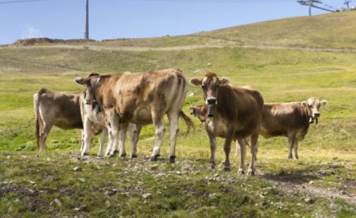 肉牛养殖繁育管理技术有哪些