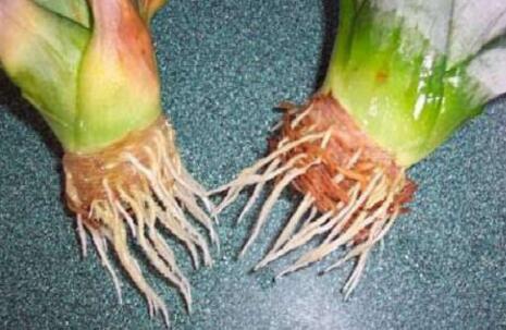 切下来的菠萝应该怎么种?