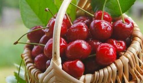 车厘子是什么季节的水果?