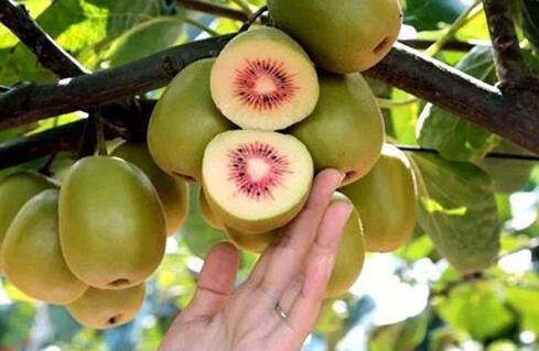 现在猕猴桃种植一亩需要多少成本?