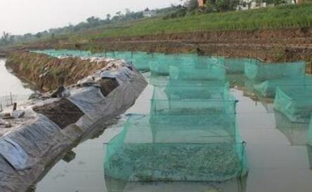 人工泥鳅养殖周期一般是多久?