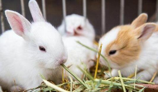 夏天35度兔子要怎么降温才行?