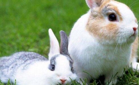 养殖兔子前景如何是否还可以养?