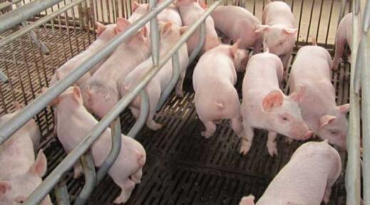 养猪补贴2021政策有什么变动?