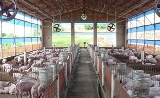 开办一家小型养猪场要投资多少钱?