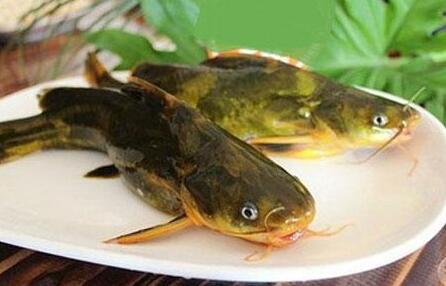 黄骨鱼一般有刺吗?