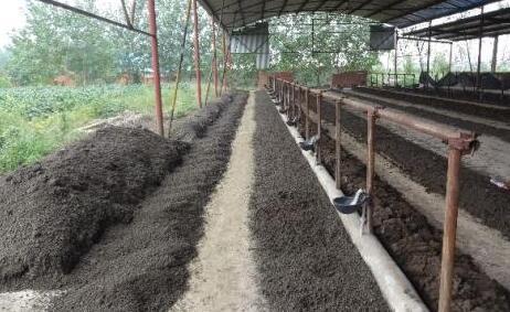 蚯蚓养殖场怎么建?