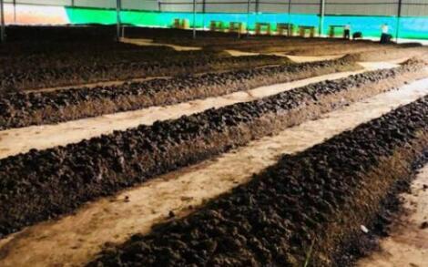 现在养殖蚯蚓一亩成本多少?