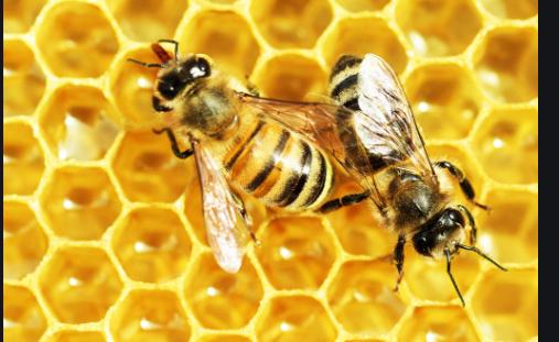 怎样才能养好蜜蜂