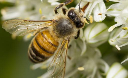 中华蜜蜂养殖技术分别有哪些
