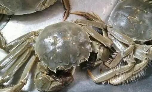 2021年养螃蟹的要亏了是怎么回事?