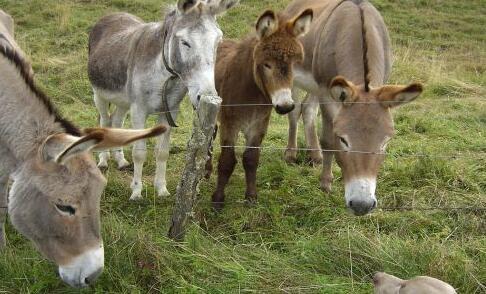 养驴技术与繁殖技术有哪些?