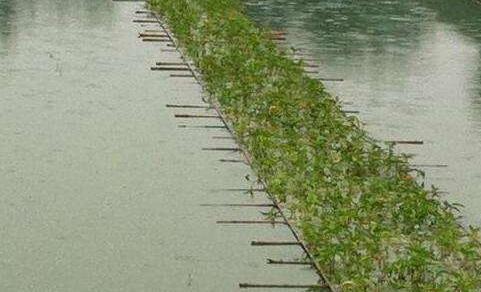 泥鳅养殖骗局是怎么回事?