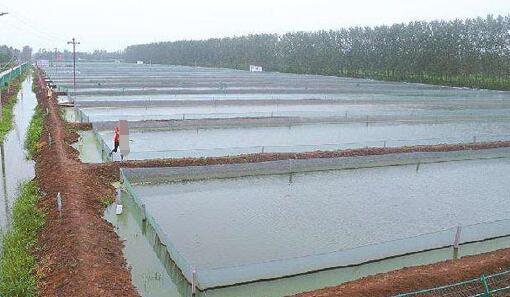 现在泥鳅养殖条件主要有哪些?