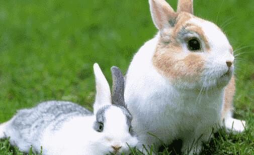 现在养50只母兔一年的利润有多少?