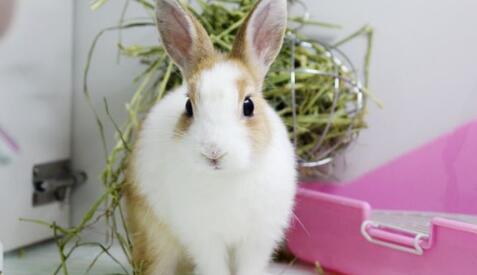 兔子最喜欢的抱姿方法有哪些?