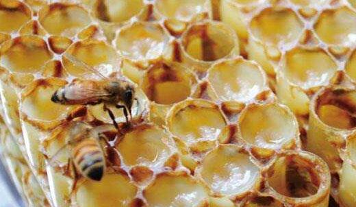 女性经常吃蜂王胎的害处有哪些?