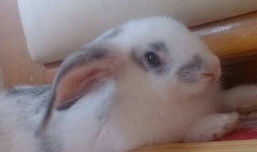 兔子养久了对人有感情吗?