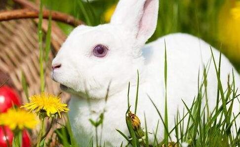 兔子什么举动是认主了?