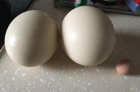 鸵鸟蛋怎样吃没有腥味?