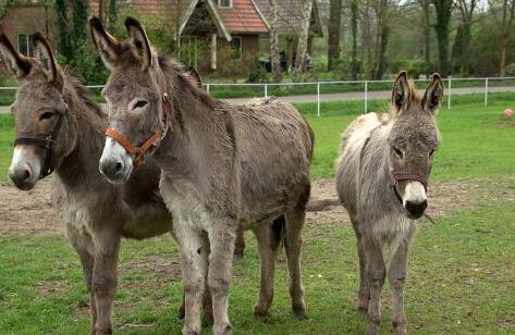 现在肉驴养殖利润有多大?